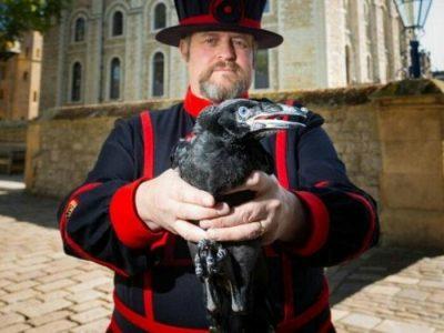 Curiosità su Londra  Il maestro dei corvi di Londra
