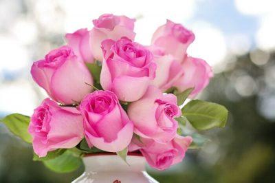 San Valentino rose