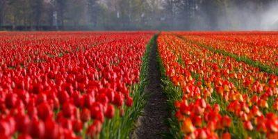 primavera 2020 tulipani