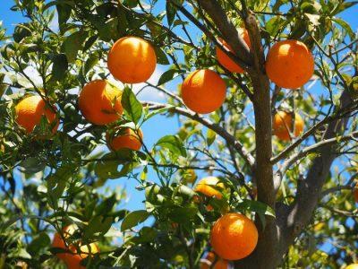 Cosa abbiamo ereditato dagli arabi arance