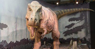 Perché ai bambini piacciono i dinosauri museo storia naturale di londra